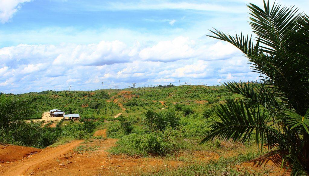 Perkebunan Kelapa Sawit PT. Runggu Prima Jaya masuk kedalam Kawasan Hutan Lindung Bukit Betabuh, INHU